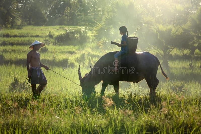 De dochter en de papa dit zijn levensstijl van familielandbouwer royalty-vrije stock afbeelding