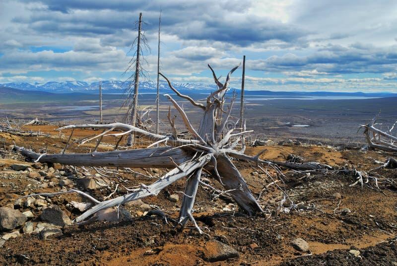 Download De dode boom stock foto. Afbeelding bestaande uit ontbossing - 10780030