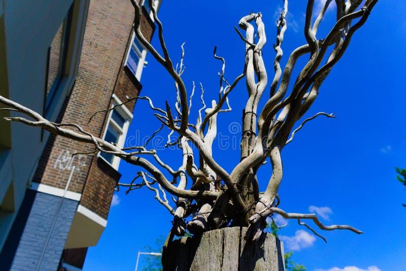 de dode boom vertakt zich decoratie royalty-vrije stock foto's