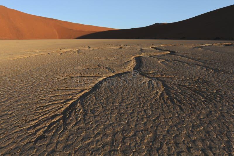 De dode Woestijn Namibië van Vlei Namib royalty-vrije stock afbeelding