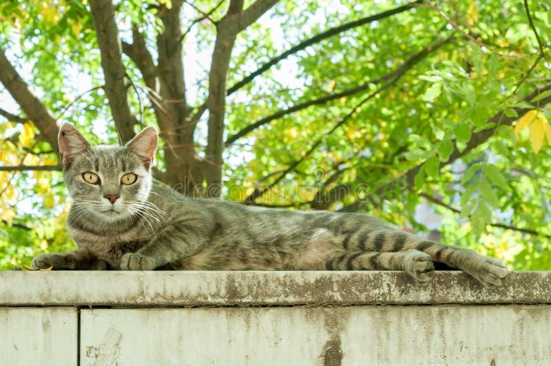 De doen schrikken kat onderzoekt de camera terwijl zij op de muur van de tuin rust royalty-vrije stock afbeelding