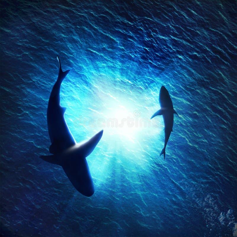 de dois tubarões que formam um círculo debaixo d'água fotos de stock royalty free