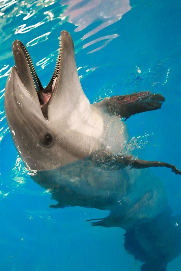 De Dolfijn leunde uit het water en opende zijn mond stock foto