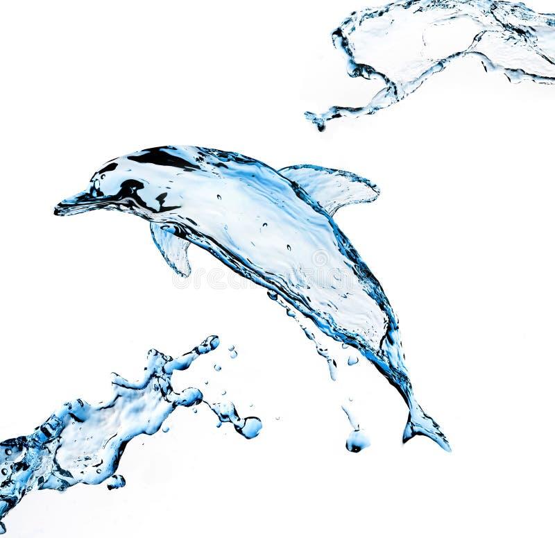 De Dolfijn van het water stock foto's