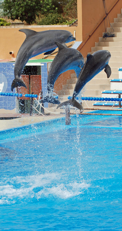 De dolfijnen tonen stock foto's