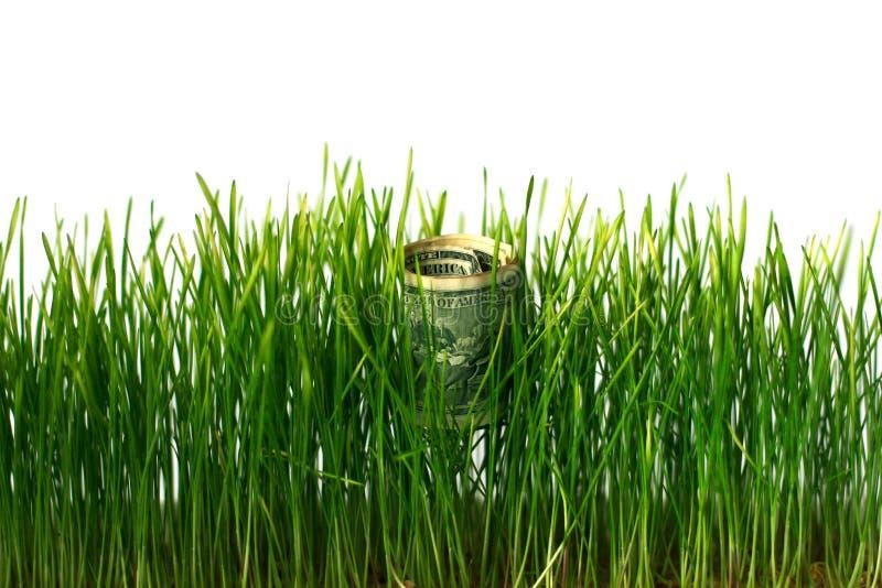 De dollars rolden omhoog in pijp bij het kweken van tarwe Concept zaken en financiën royalty-vrije stock foto's