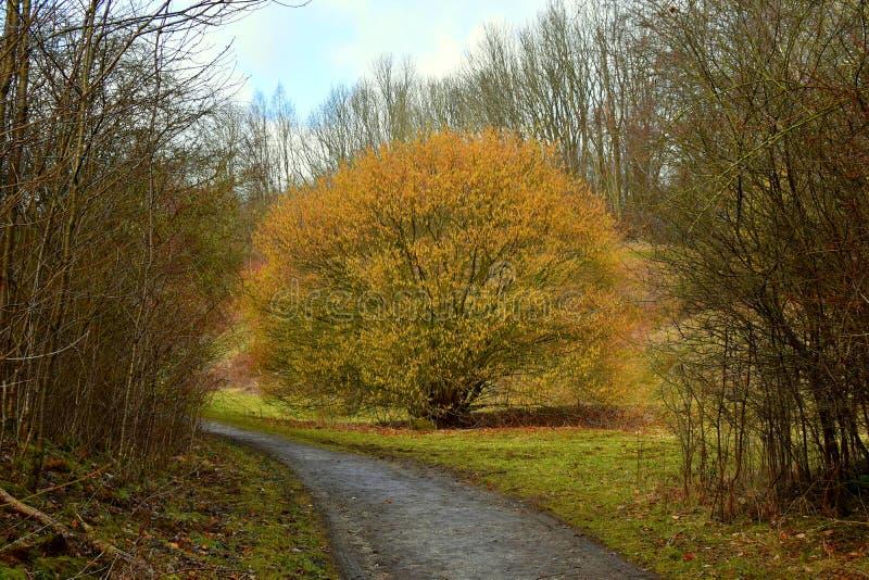 De Donkere bomen van het de herfstlandschap en gevallen bladeren op een natte weg in Steegpark na de regen Een eenzame boom met v royalty-vrije stock afbeelding