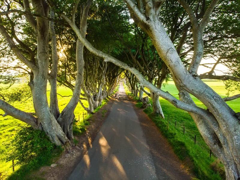 De Donkere Hagen, een weg van beukbomen langs Bregagh-Road in Provincie Antrim, Noord-Ierland stock afbeeldingen