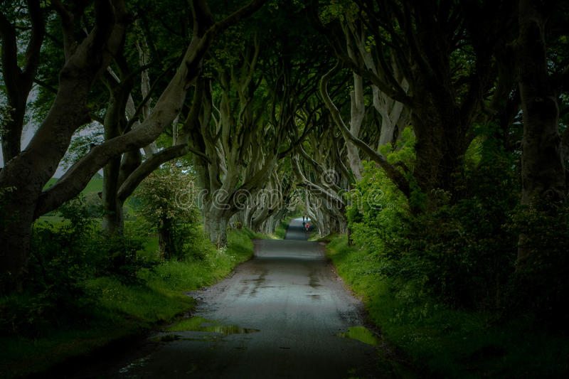 De Donkere Hagen, Noord-Ierland stock foto