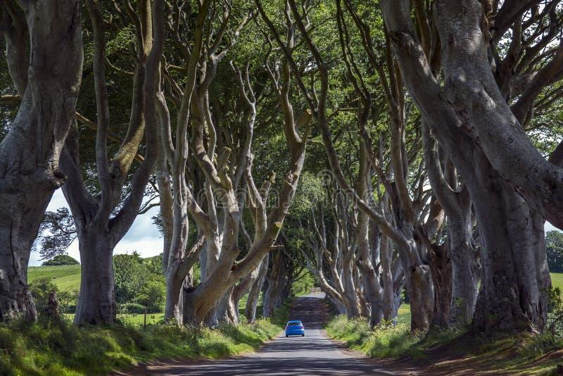 De Donkere Hagen - Provincie Antrim - Noord-Ierland royalty-vrije stock foto's