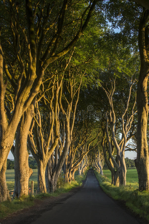 De Donkere Hagen - Provincie Antrim - Noord-Ierland stock fotografie
