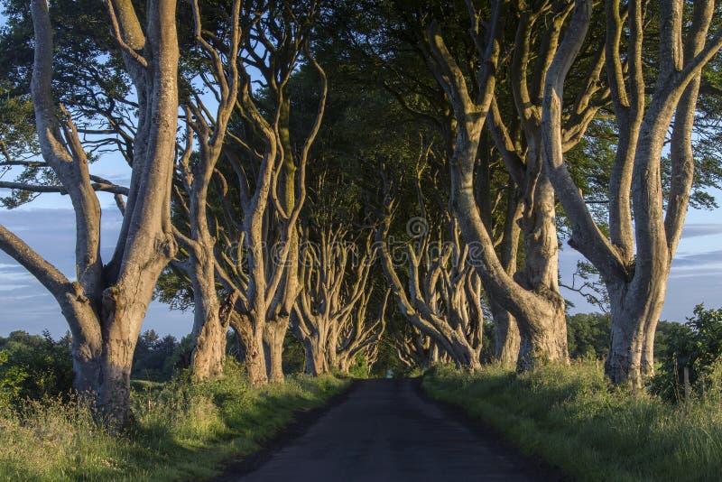 De Donkere Hagen - Provincie Antrim - Noord-Ierland royalty-vrije stock afbeeldingen