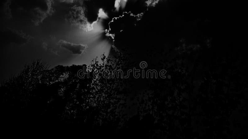 De donkere lichte maan van de bomenhemel royalty-vrije stock afbeelding