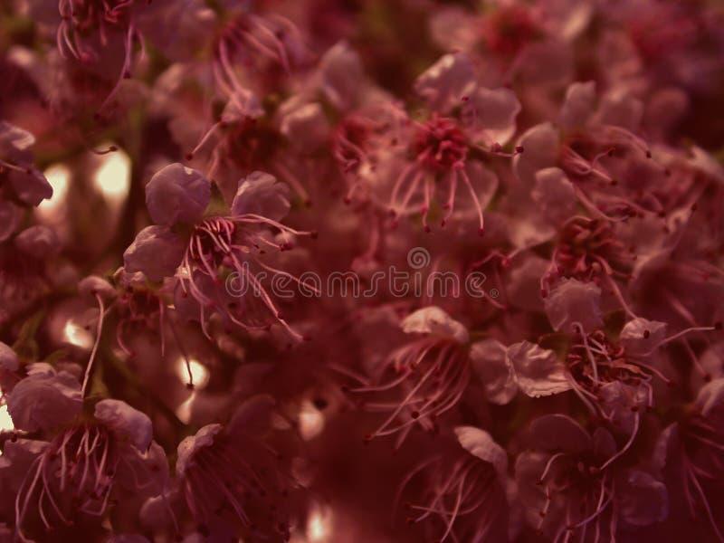 De donkere Textuur van Bloembloemblaadjes royalty-vrije stock foto's