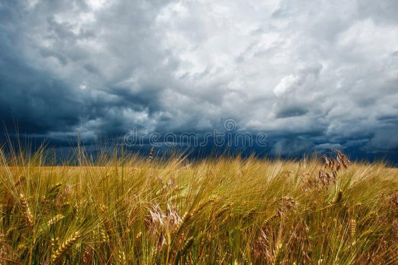 De donkere wolken van het onweer over gebied stock afbeelding