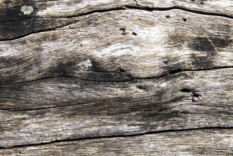 De doorstane houten foto van het textuurclose-up Oud hout met doorstane barsten Drijfhoutachtergrond De rustieke close-up van de  royalty-vrije stock afbeeldingen