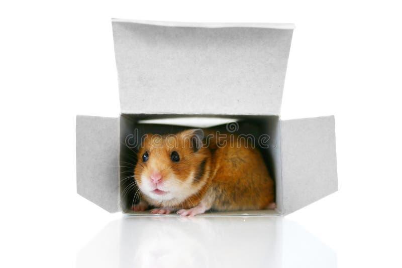 In de doos stock afbeeldingen