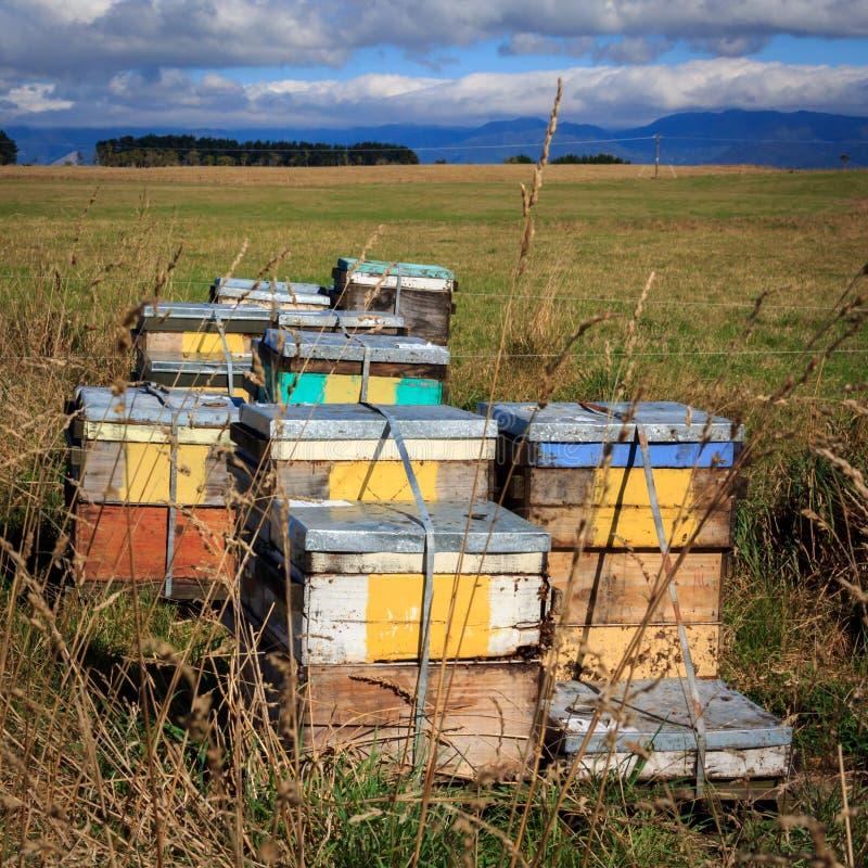 De doos van het bijenkorflandbouwbedrijf royalty-vrije stock afbeelding