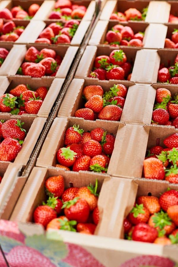 De dozen met rijpe verse aardbeien sluiten omhoog stock fotografie