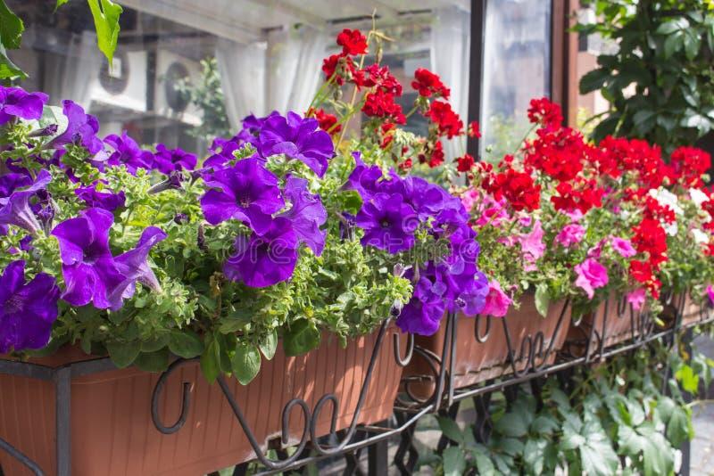 De dozen van de balkonbloem met bloemen worden gevuld die royalty-vrije stock afbeelding