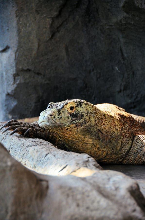 De Draak van Komodo royalty-vrije stock afbeelding