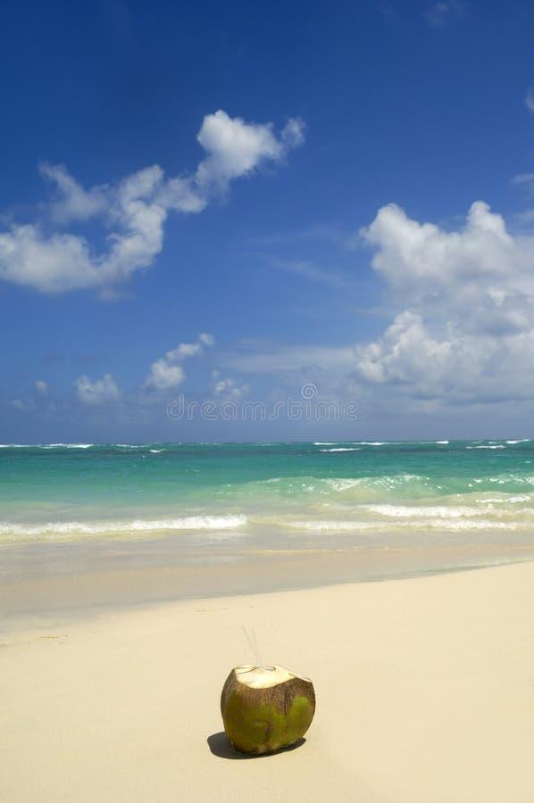 De drank van de kokosnoot op exotisch strand stock afbeeldingen