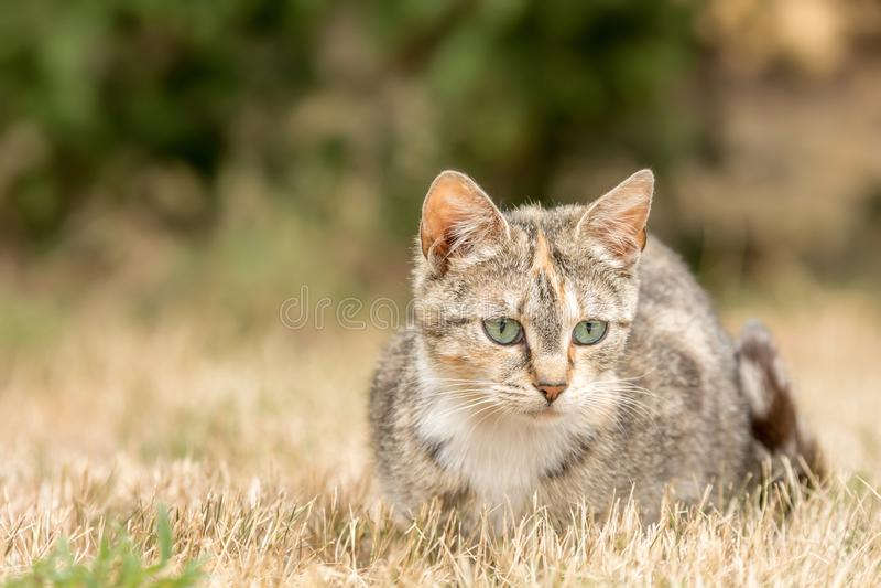 De drie-gekleurde kat zit op een weide royalty-vrije stock foto
