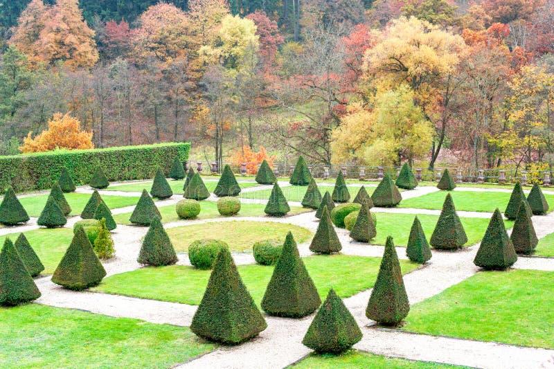 De driehoek vormde topiary groene bomen in Burresheim-Kasteel ornamen royalty-vrije stock foto