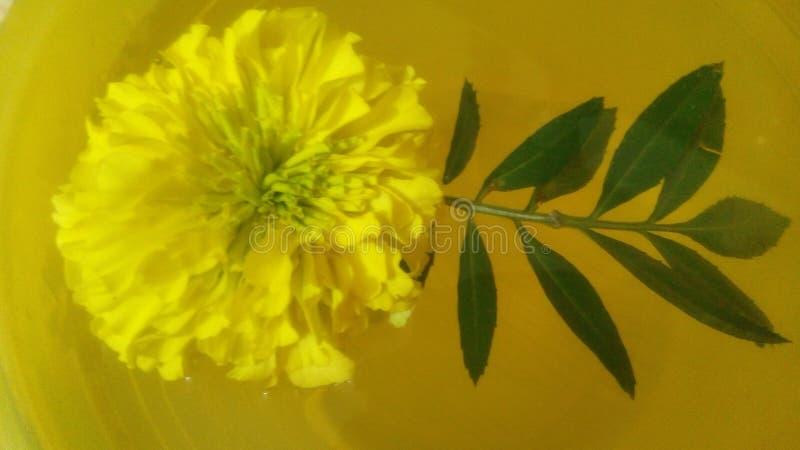 de drijvende gouden bloem van Mary royalty-vrije stock afbeeldingen