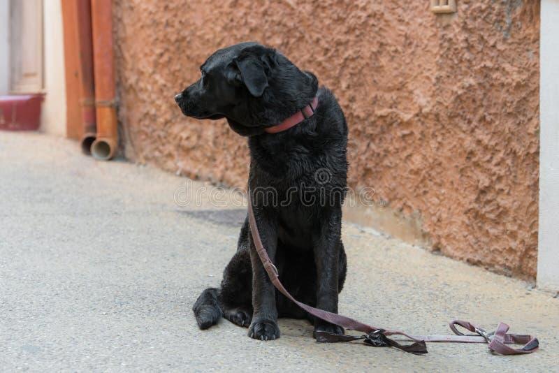 De droevige zwarte hond zoekt zijn verloren meester royalty-vrije stock fotografie