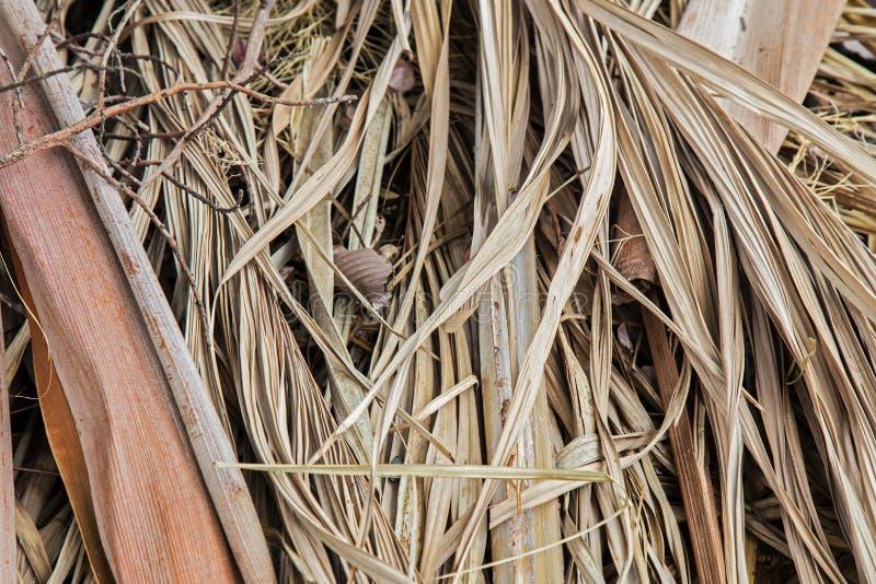 De droge achtergrond van het Palmblad stock fotografie