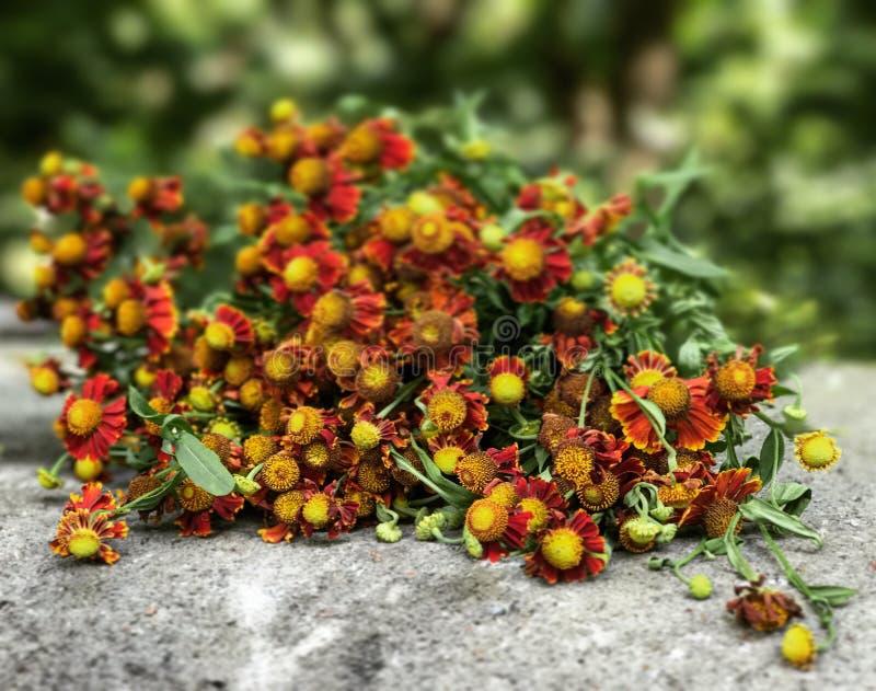 De droge bloemen zitten op een richel royalty-vrije stock foto's