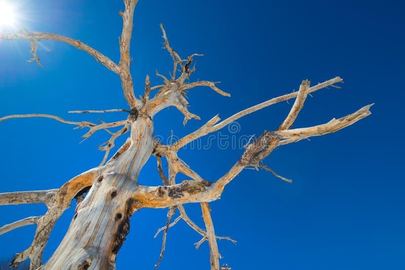 De droge die boom van het losbarsten wordt gebrand zet Etna op royalty-vrije stock afbeelding
