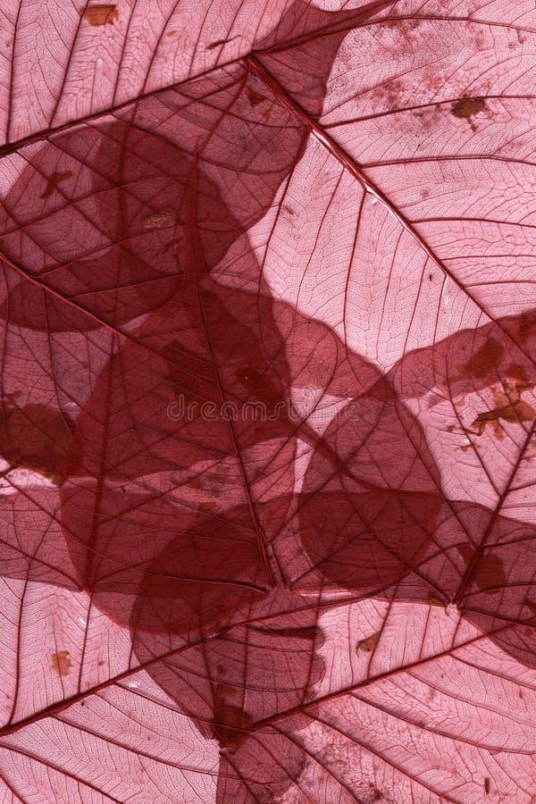 De Droge Macro Van Bladeren - Rood Stock Afbeelding