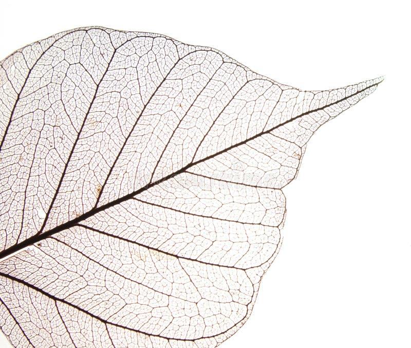 De droge textuur van het bladdetail stock foto's