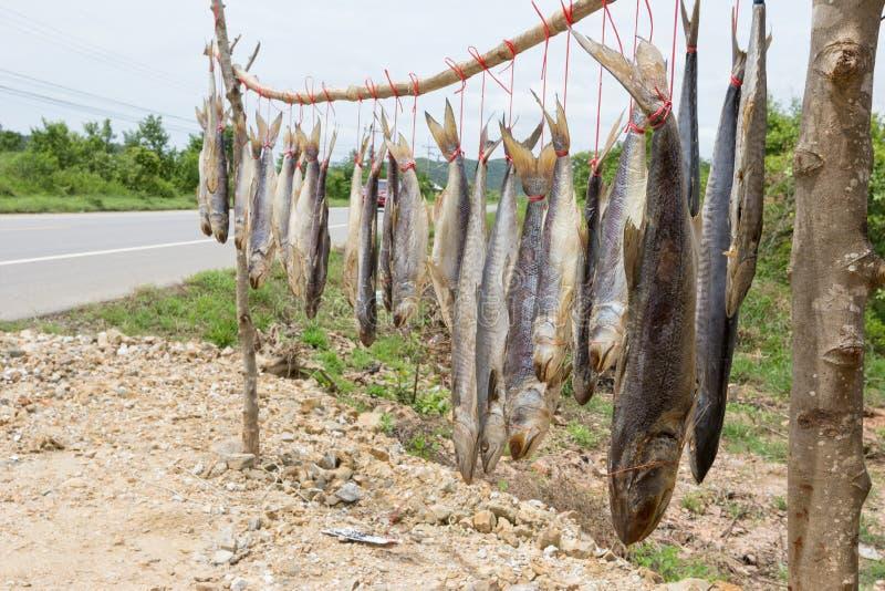 De droge vissen van de koningsmakreel, gezouten vissen royalty-vrije stock foto