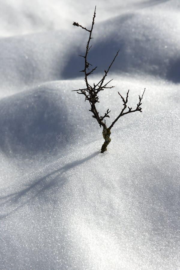 De droge woestijn van de sneeuwduinen van de tak eenzame boom stock afbeelding