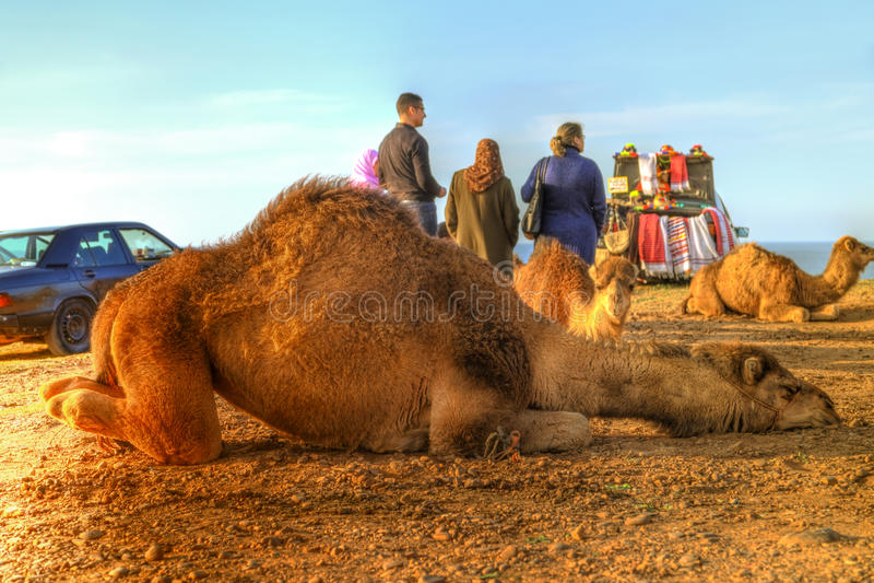 De dromedaris legt in het zand royalty-vrije stock fotografie