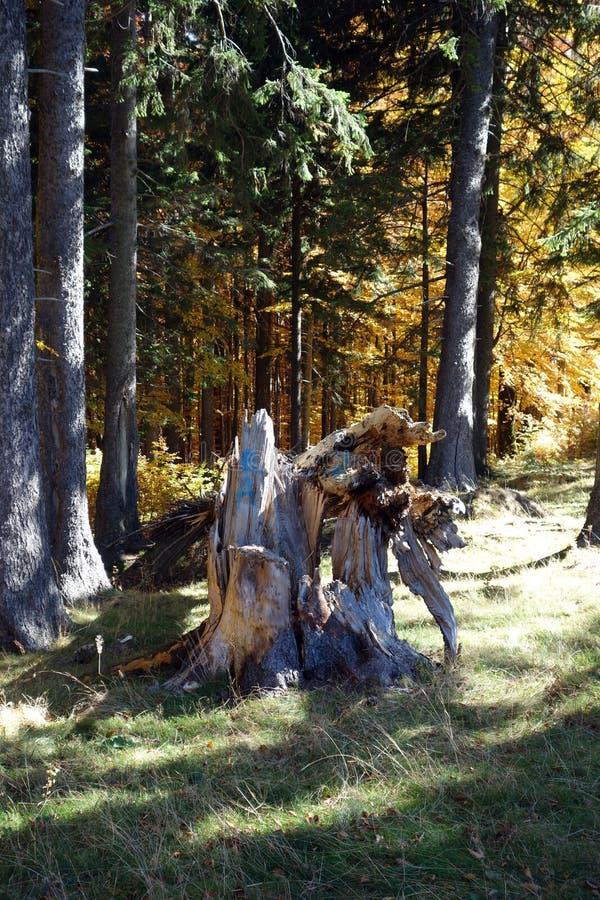 De droomherfst in Karpatische Bergen 5 royalty-vrije stock afbeelding