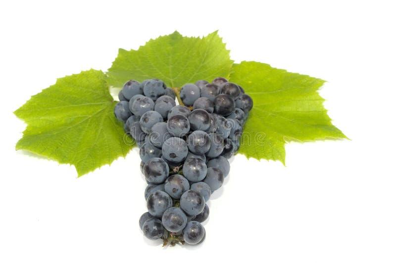 De druif doorbladert royalty-vrije stock foto