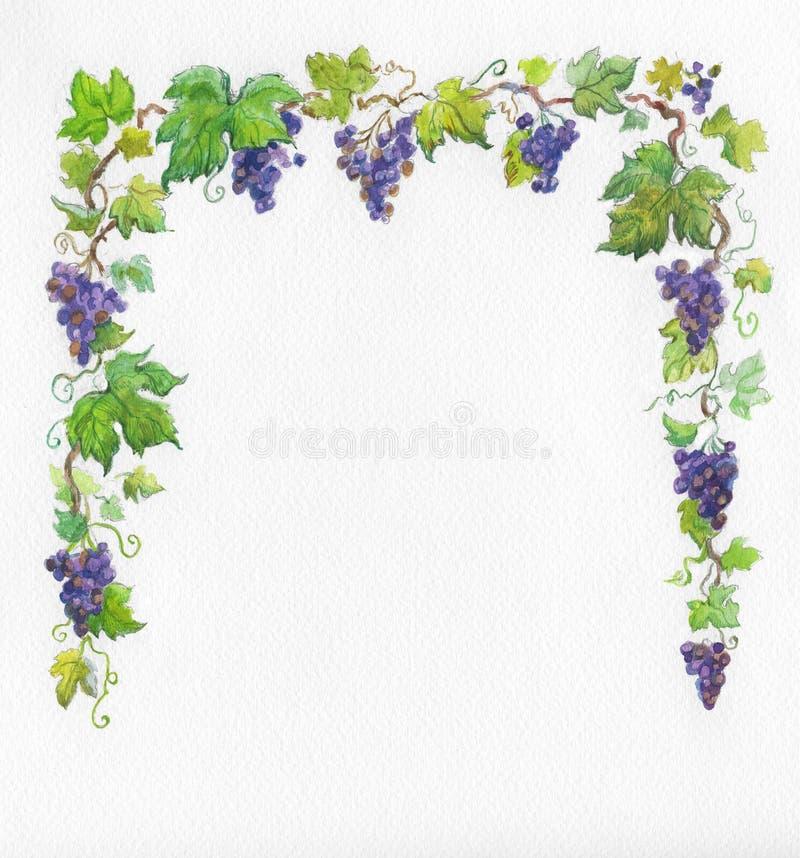 De druiven van het frame. Waterverf. royalty-vrije illustratie