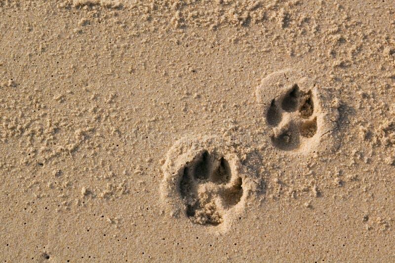 De drukken van de hondpoot op zand stock afbeelding