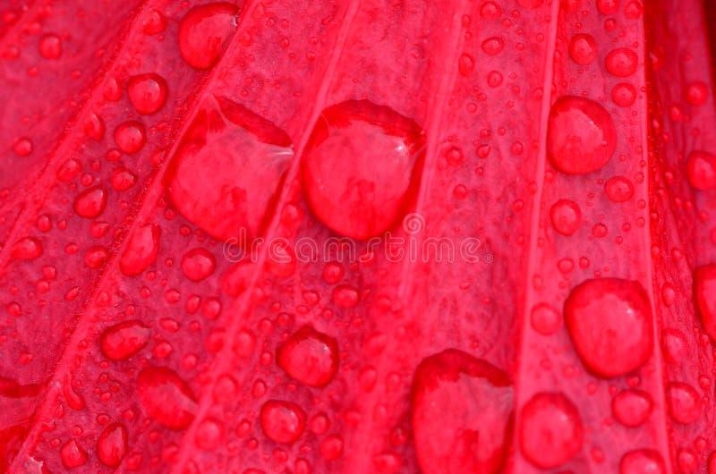 De Druppeltjes van de inval op Rode Bloem stock afbeeldingen