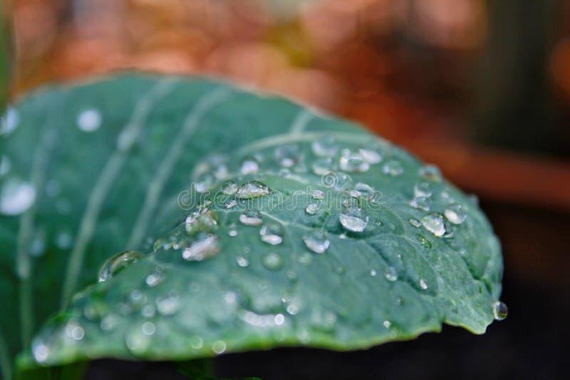 De druppeltjes van het water op blad stock fotografie