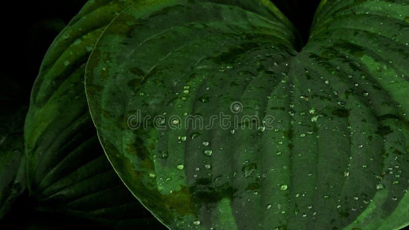 De druppeltjes van het water op de bladeren stock foto's