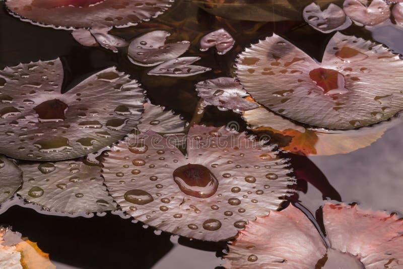 De druppeltjes van het water op bladeren royalty-vrije stock fotografie