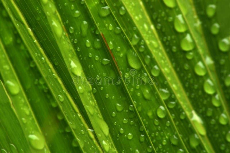 De druppeltjes van het water op groen royalty-vrije stock foto