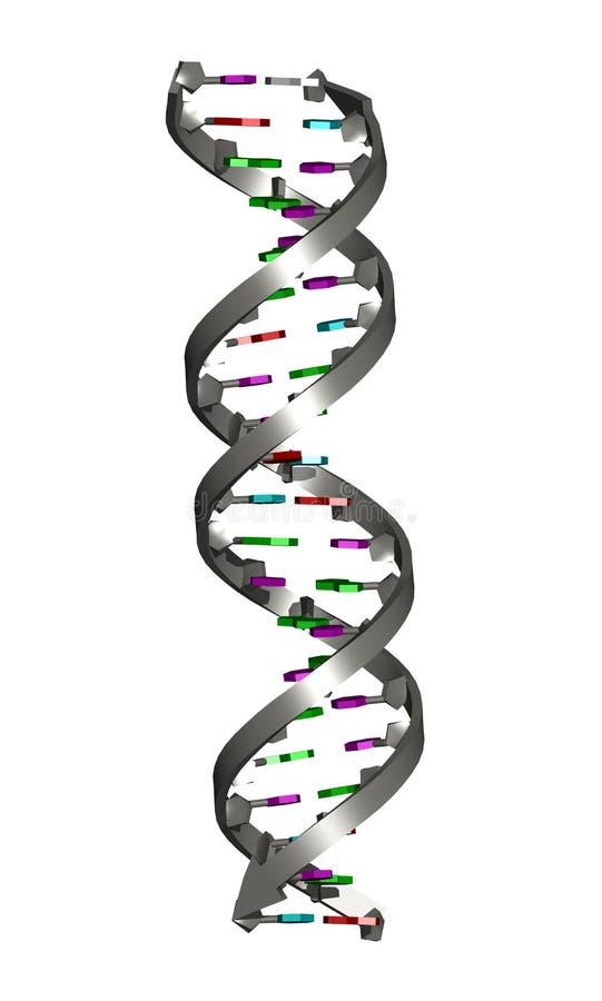 De Dubbele Schroef van DNA stock illustratie