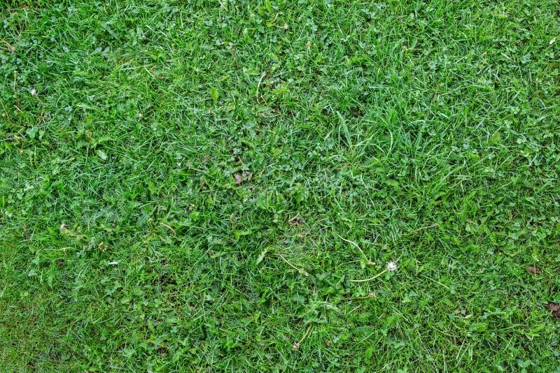 De duidelijke groene hoogste mening van de grastextuur stock afbeelding