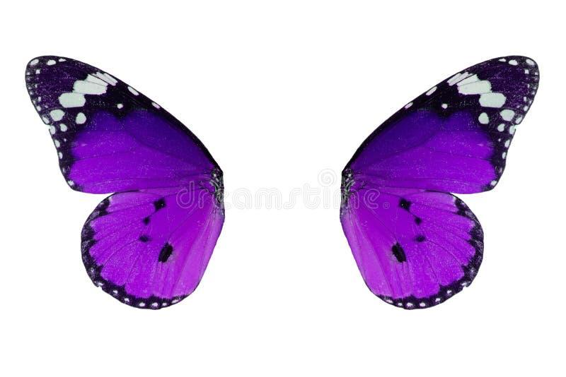 De duidelijke vlinder van de Tijger (chrysippus Danaus) stock foto